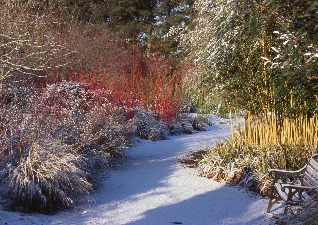 kert otthon tél ősz avar fenntarthatóság természetvédelem sün