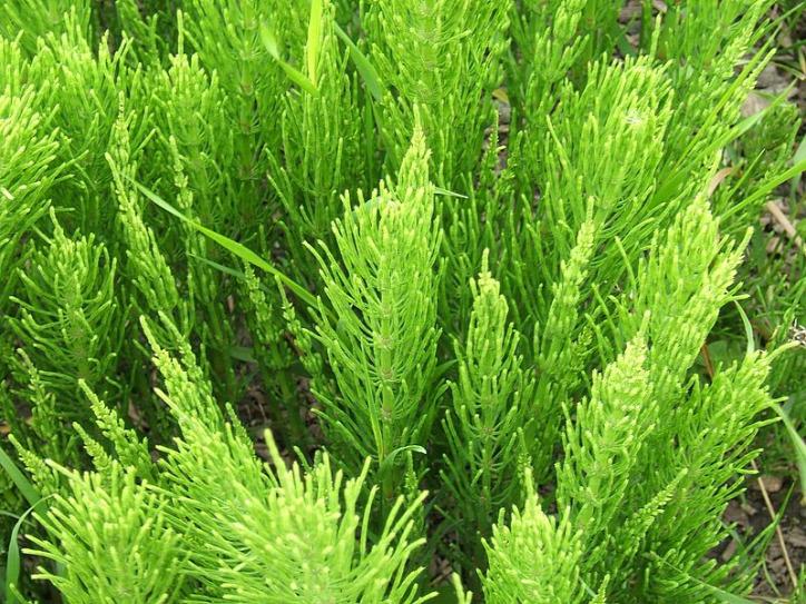 gyom talaj vizes talaj száraz talaj savanyú talaj meszes talaj gyomnövények talajminőség