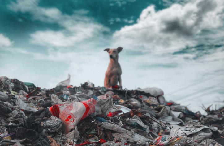 újrahasznosítás nullahulladékos  zero waste otthon fenntarthatóság