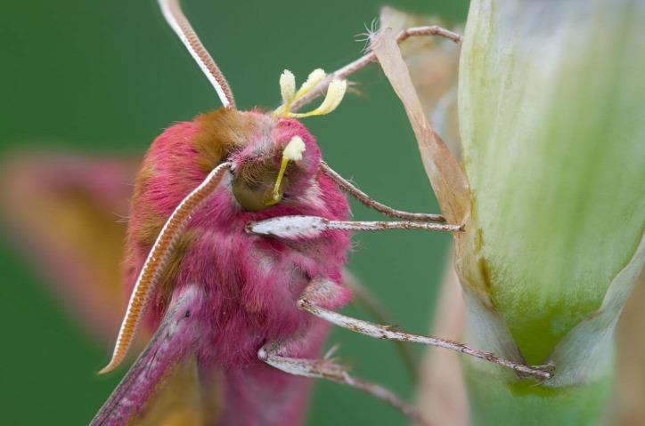 beporzás méh rovar mezőgazdaság
