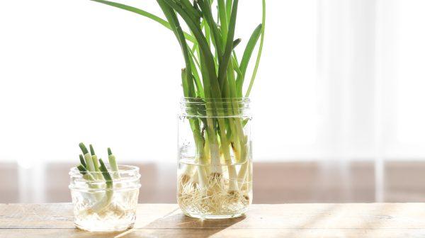 Növeszd újra a zöldségeket konyhai hulladékból!