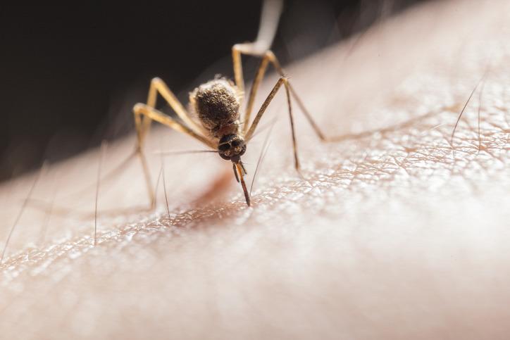 szúnyog természetvédelem szúnyogcsapda