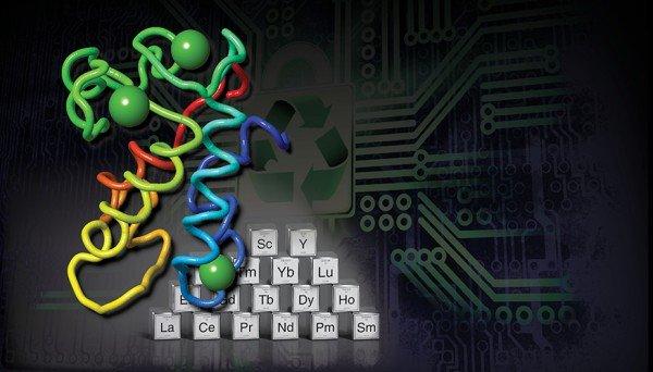Egy fehérje kizabálja a ritkaföldfémeket az elektronikai hulladékból
