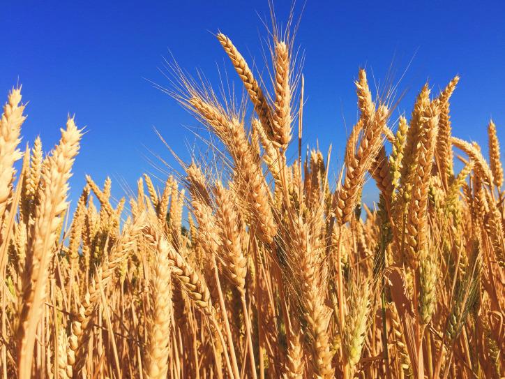 mezőgazdaság fenntarthatóság