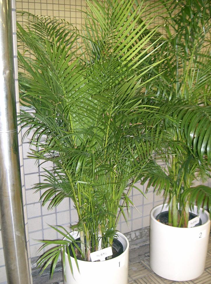 szobanövény növény légtisztítás levegőminőség koronavírus