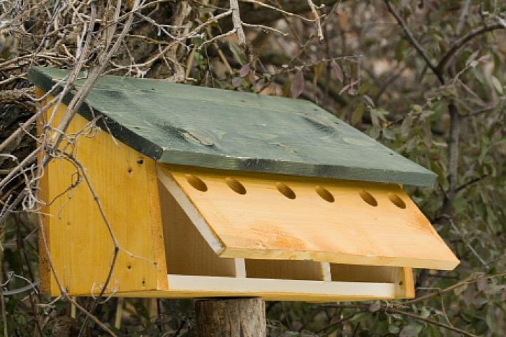 természetvédelem város otthon madár veréb szúnyog madárfészek