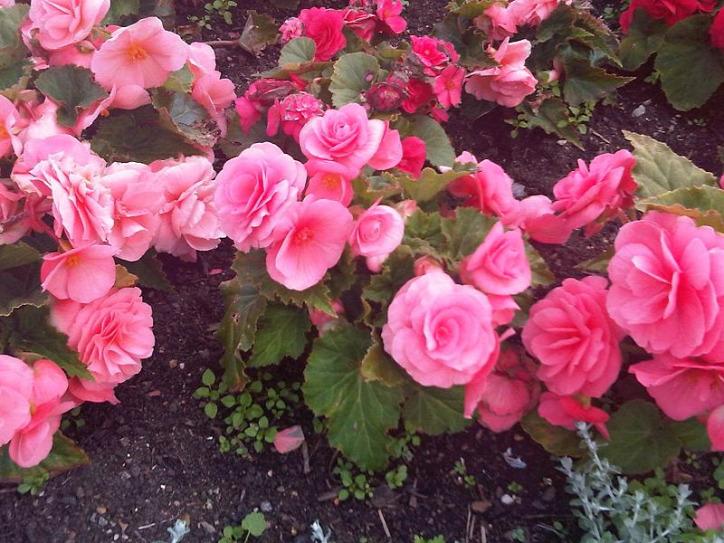 kert mérgező virág növény otthon