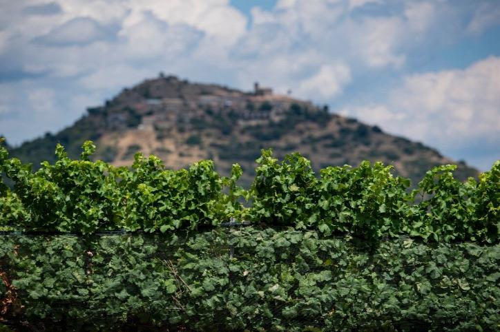 klímaváltozás klímaválság klímakatasztrófa éghajlatváltozás bor Spanyolország borászat szőlő