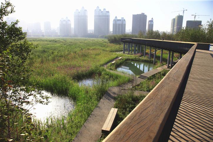 szivacsváros fenntartható építészet urbanisztika városi életmód csapadék klímaváltozás klímaválság