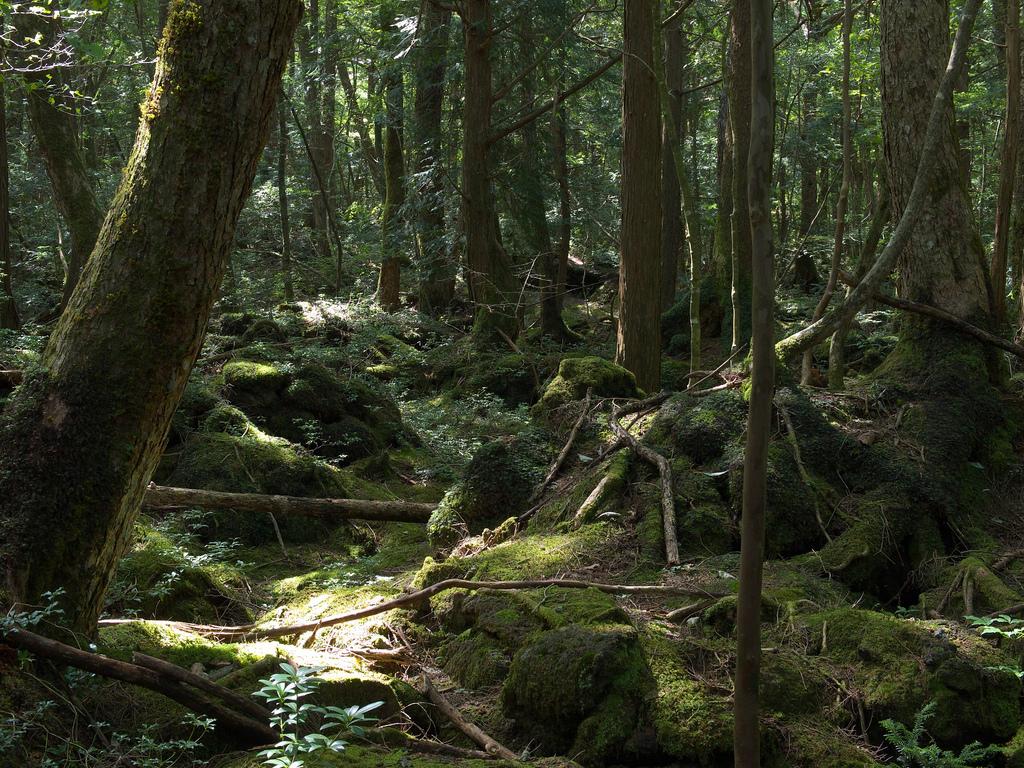 öngyilkosság japán erdő megelőzés földrengés katasztrófa suicid szuicid prevenció módszer rizikó dzsukai
