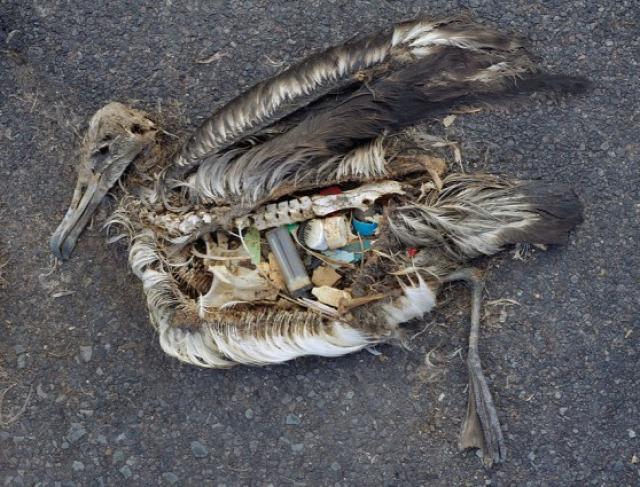 hírességek interjú környezetvédelem művészet