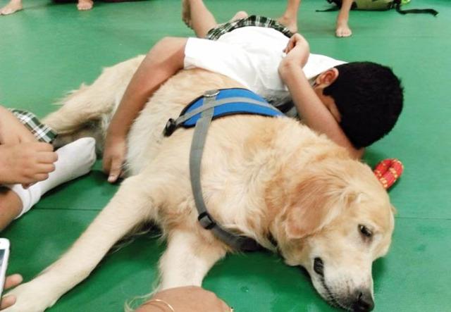 utazás közlekedés állatok ahimsza stressz
