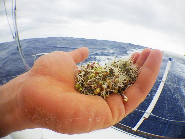 ahimsza egészség környezetvédelem megújuló energia sport utazás