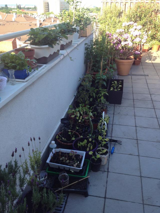 kertésznapló tavasz