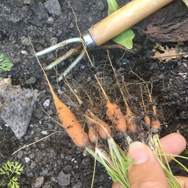 ősz kertésznapló vetés