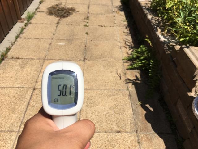 meleg ültetés érdekesség meleg ellen árnyékolás