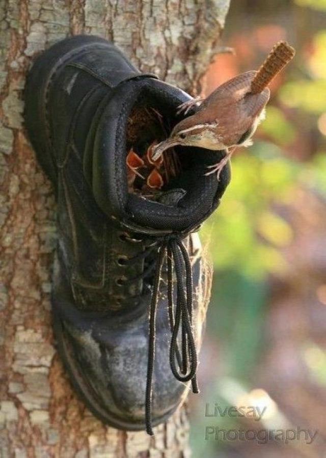 ősz tél madáretető DIY inspiráció újrahasznosítás