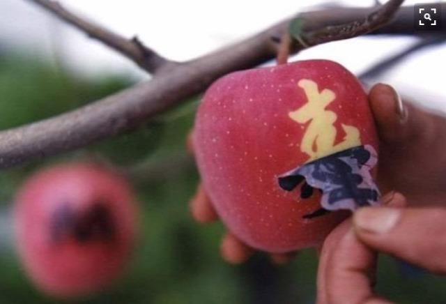 érdekesség gyümölcsök