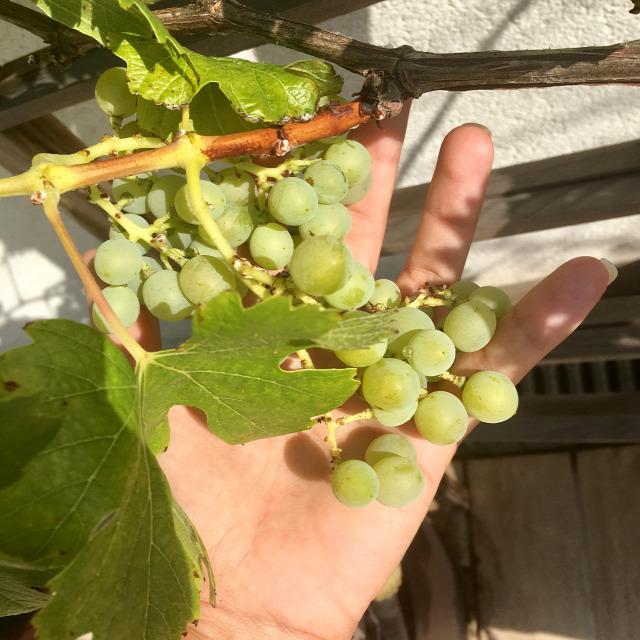 ősz ültetés teleltetés