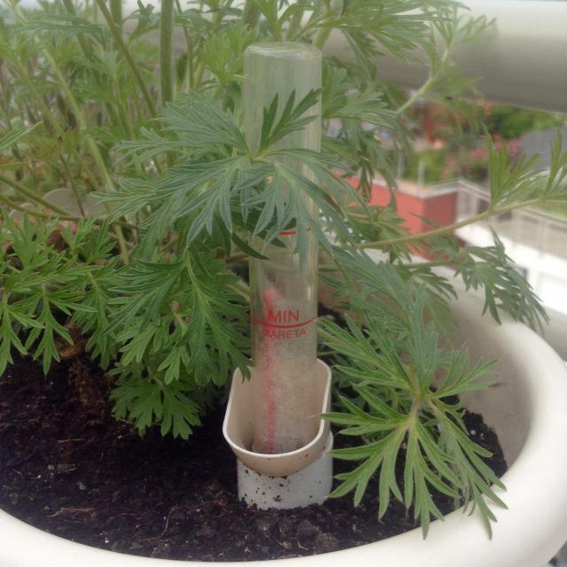 nyár növényvédelem Top5 öntözés