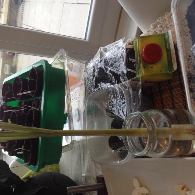 palánta tavasz konyhakert újrahasznosítás