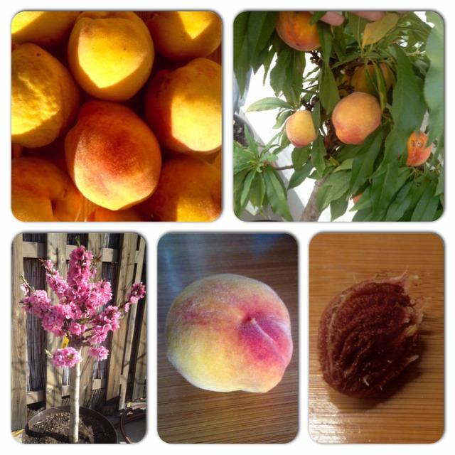 szüret ősz vöröshagyma eper paradicsom áfonya barack