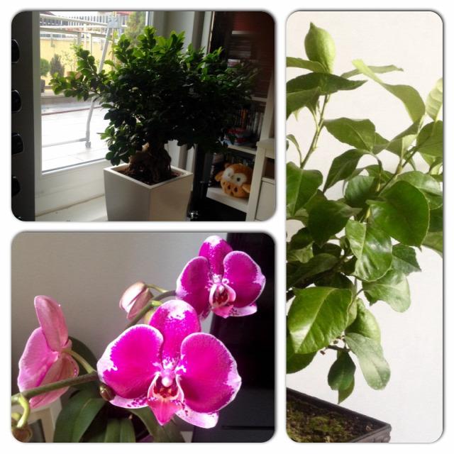 Be kell vinni a szobanövényeket