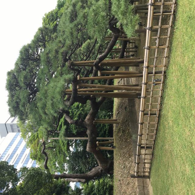 nagyvilág japánkert