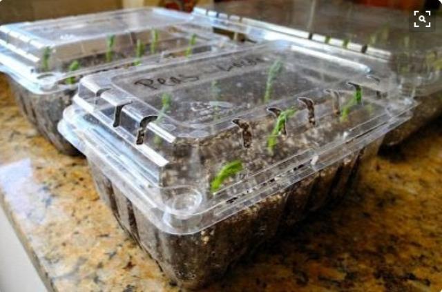 újrahasznosítás ültetés