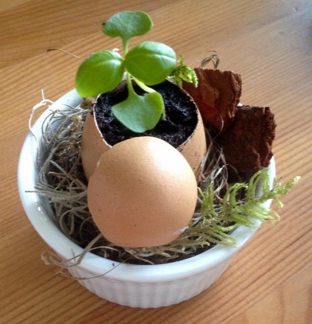 palánta tavasz húsvét retek tojáshéj újrahasznosítás