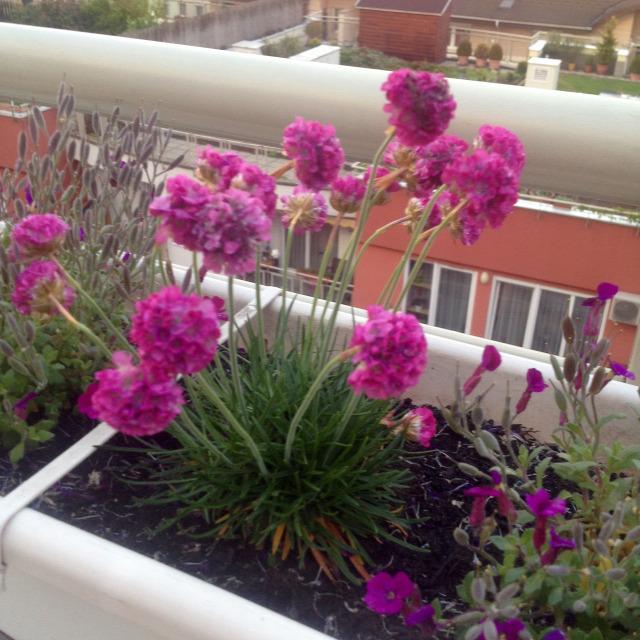 Top5 virágok balkonláda