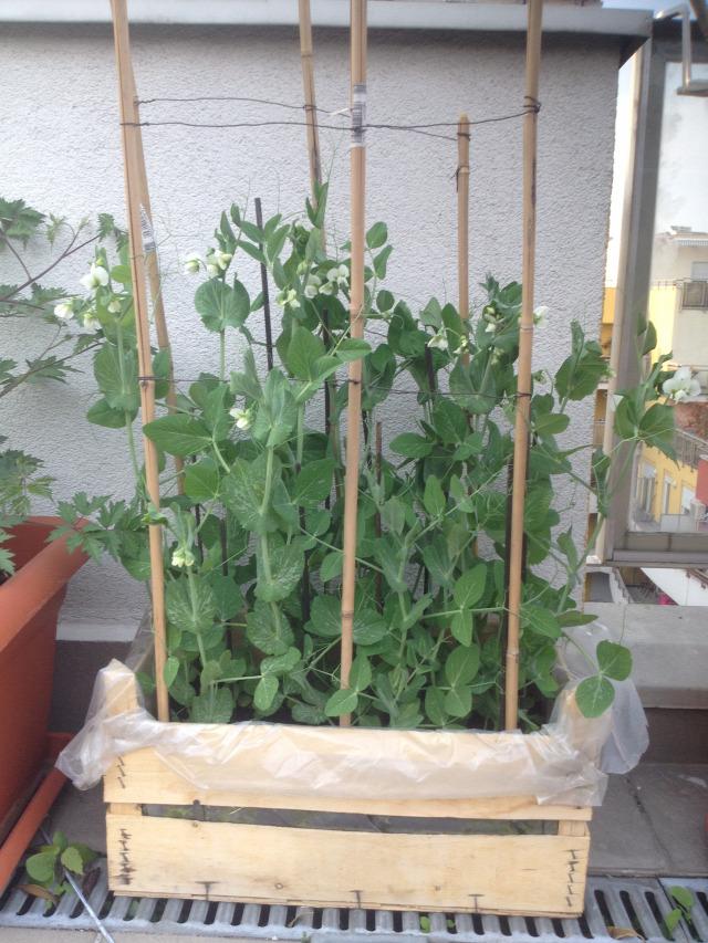 Balkonláda zöldséges ládából