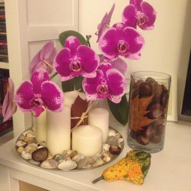gyorstipp orchidea