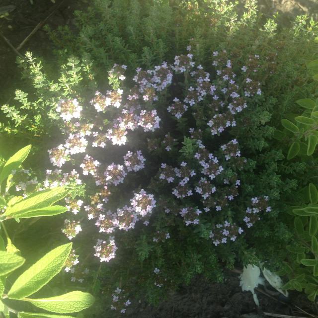 rovarok méhek