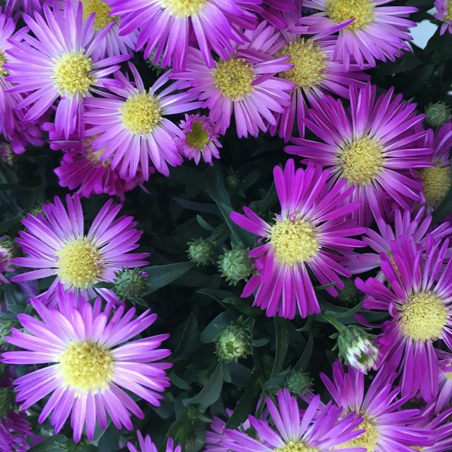 ősz virágok