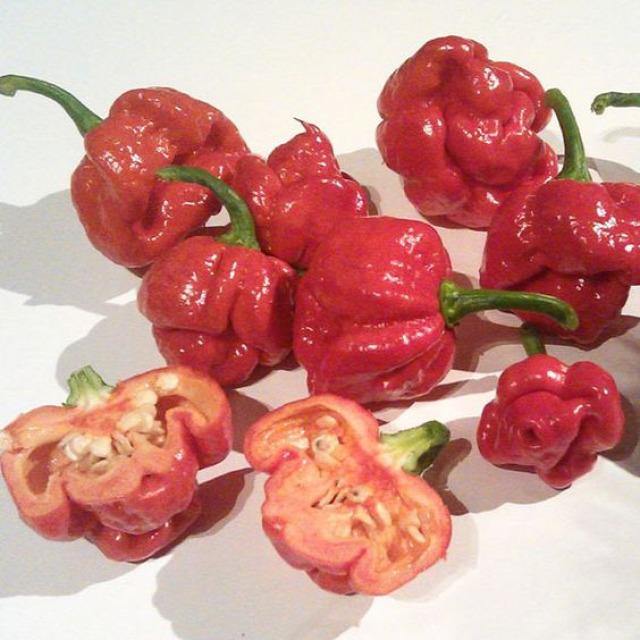 chili konyhakert fűszer trinidad scorpion paprika