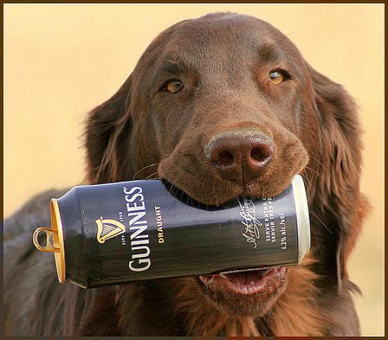 reklámpszichológia kutya sör kreatív