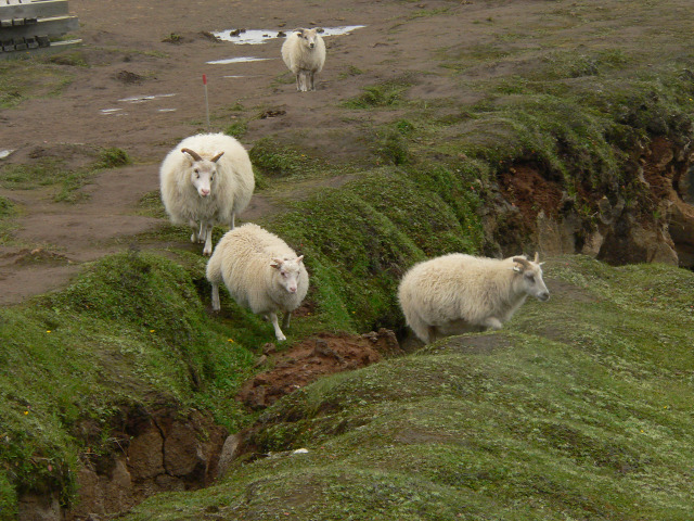 5+1 Izland látnivalók