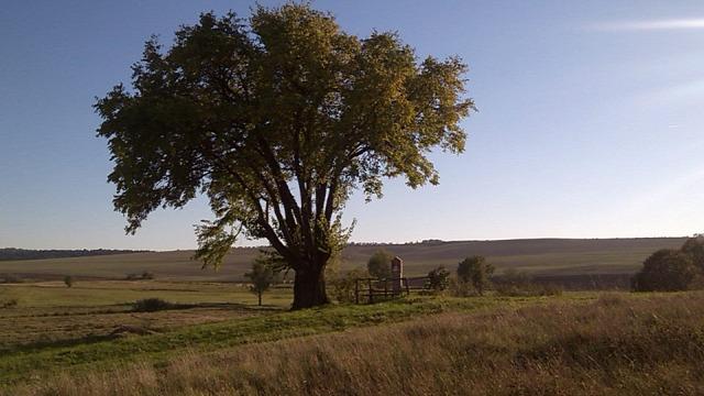 A mi kis falunk és Kojot