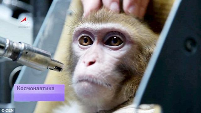 mars űrkutatás orosz majom