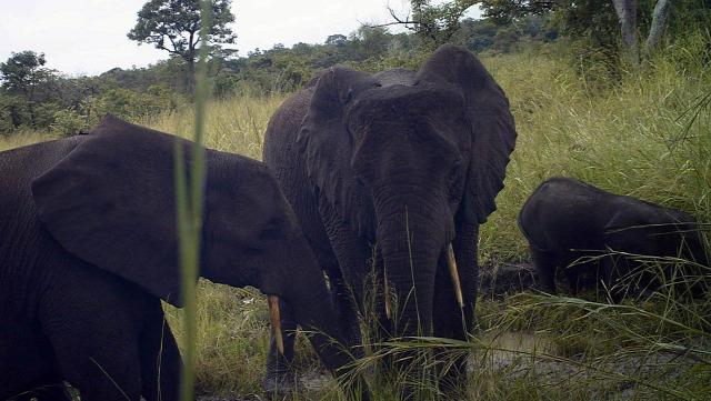 polgárháború élővilág természetvédők