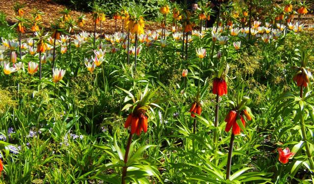 Hollandia arborétum virágok