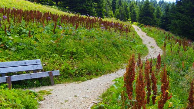 Ausztria Alsó-Ausztria Ötscher hegy csúcskereszt