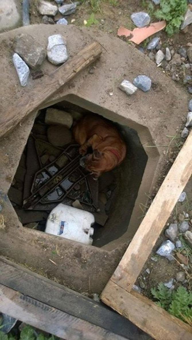 kutya mentés állatok