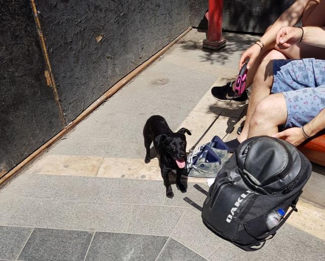 házikedvenc kisállat kutya kutyasétáltatás kutyapiszok kutyagumi társasház 2018 Budapest Magyarország