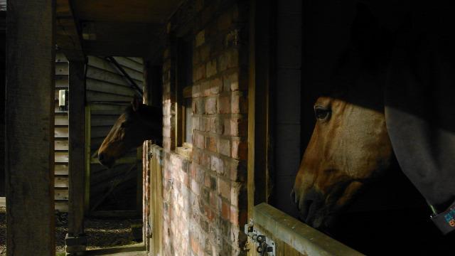 ludlow farm anglia workaway