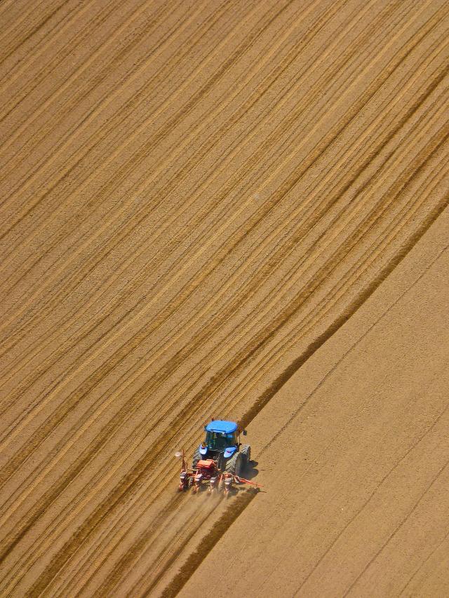 növényvédelem jogszabály