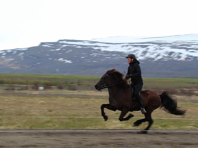 EVS Izland Egilstadir Seydisfjördur önkéntes Iceland SEEDS