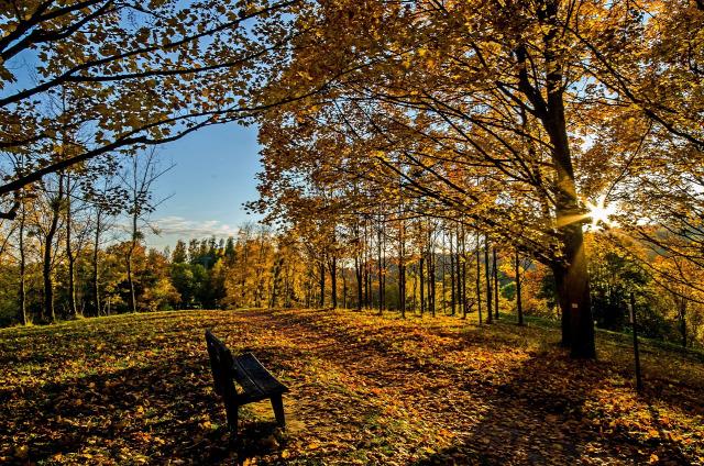 szépség ősz