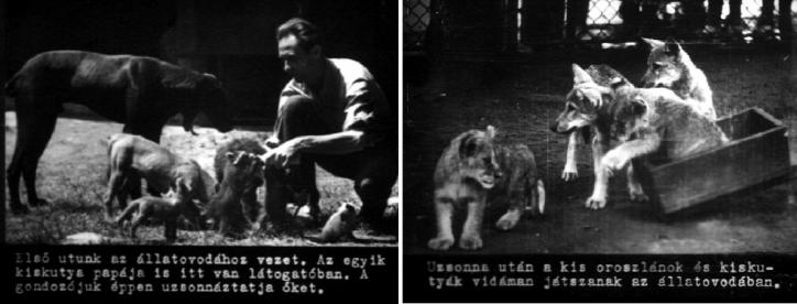 Liget Budapest Projekt Budapest Városliget Kutyák
